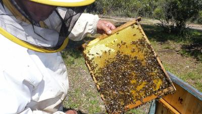 Grave daño sufren apicultores de Fuerte Olimpo por incendio provocado