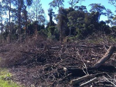 Plantean extender vigencia de Ley de Deforestación Cero