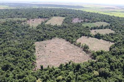 Acciones contra delitos ecológicos son debatidas con el MADES – Diario TNPRESS