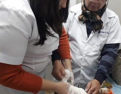 En Alto Paraná, 27 niños alinean sus piecitos mediante tratamiento del PIE BOT y la Fundación Solidaridad