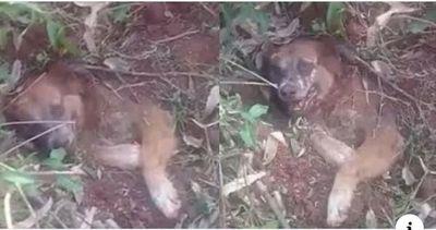 Sin piedad, un perro fue enterrado vivo