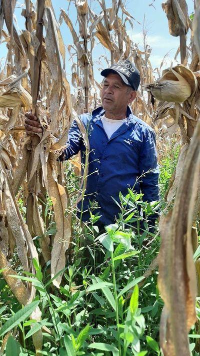 Uso de biotecnología agrícola facilita el arraigo en Caazapá