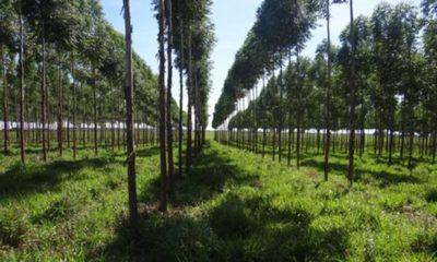 » INFONA apuesta por la producción forestal sostenible como alternativa para reducir la pobreza en el campo