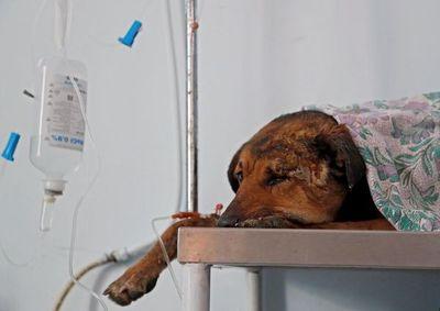 Aplican primera pena máxima por maltrato animal en Paraguay