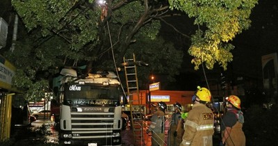 Árbol de tajy cae sobre camión y deja sin luz a todo un barrio en Acceso Sur