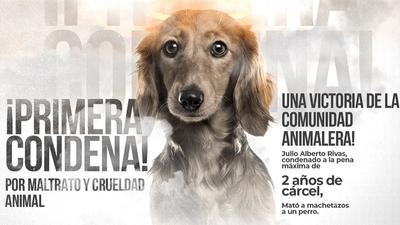 Histórico en Paraguay: Condenaron a 2 años de cárcel a hombre que mató a su perro