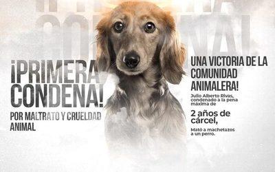 Condenan  a hombre que mató a perro con machete