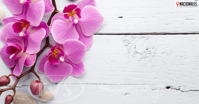 12 plantas que irradian energía positiva en tu hogar