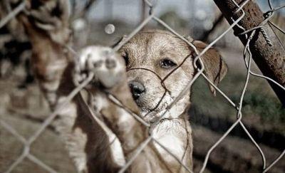 Primera condena por maltrato animal con pena máxima en Paraguay