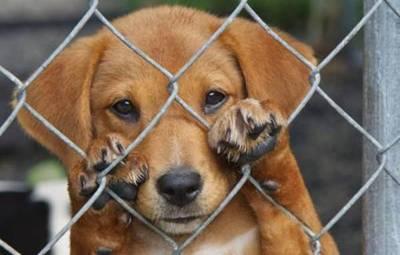 Rescatistas afirman que la Dirección de Defensa Animal confundió a la ciudadanía ya que condenado no irá a la cárcel