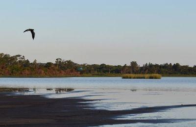 Nada se hace por el lago Ypacaraí