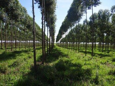 La producción forestal podría ayudar a mejorar la economía del campo