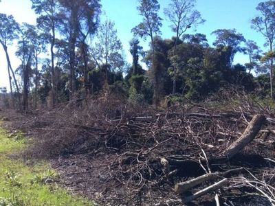 Cuarentena  es aprovechada para la cacería furtiva y la deforestación
