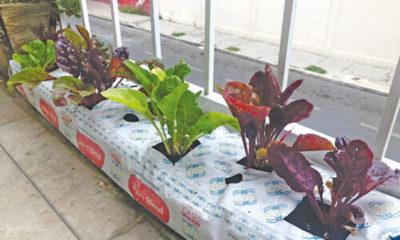 » Huertos urbanos, una alternativa para la alimentación