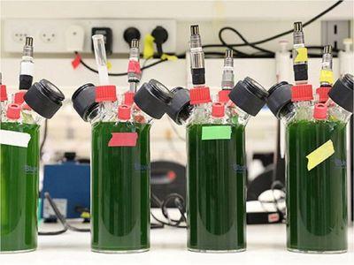 Investigadores en Israel producen electricidad a partir de plantas
