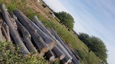 Indígenas ayoreos denuncian deforestación de sus tierras