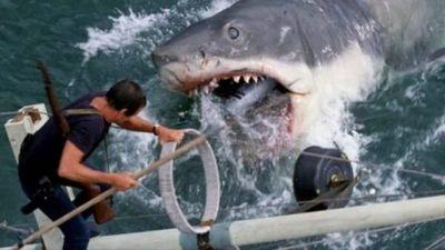 45 años de Tiburón