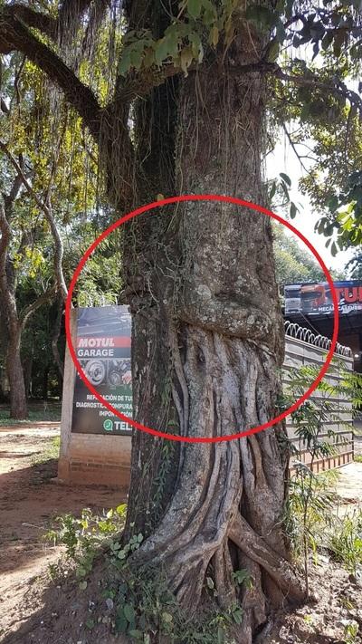 Calle'i: El árbol que se abraza a si mismo