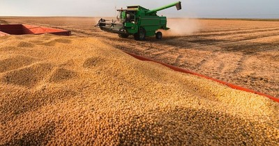 Buen rendimiento de soja y costos de producción bajos ayudan a compensar pérdidas