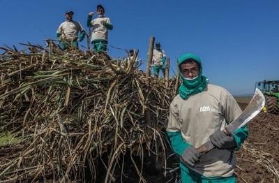Crédito Agrícola de Habilitación otorgará línea de crédito a cañicultores