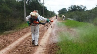 Senave mantiene alerta en Región Oriental ante presencia de langostas en países vecinos