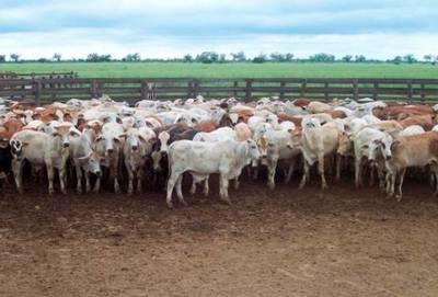 """Crisis en la ganadería: """"No estamos recibiendo ni para cubrir nuestros gastos, estamos comiendo nuestros ahorros"""""""