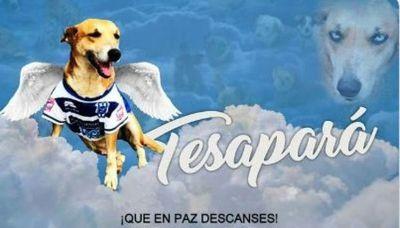 Fallece Tesapará, la mascota del 2 de Mayo