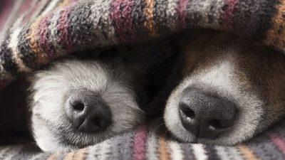 Fin de semana frío e ideal para quedarse en casa