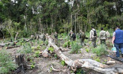 Destruyen plantaciones de marihuana dentro del Parque Nacional Serranías San Luis – Diario TNPRESS
