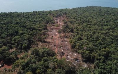 Preocupante deforestación en franja de protección de Itaipú