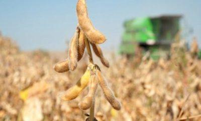 » Precio de la soja no llenó expectativas en el campo