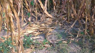 Hallan cadáver de una niña indígena en Capitán Meza, Itapúa · Radio Monumental 1080 AM
