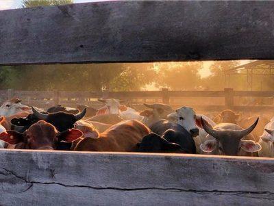 Otra semana con suba de precio para el ganado con destino a plantas exportadoras