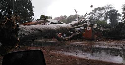 Frondoso árbol cayó sobre una ferretería