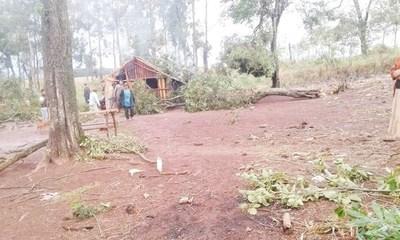 Tormenta derribó árbol y este cayó sobre niña de 3 años, matándola en el acto