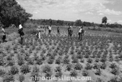 Productores de la comunidad Vy'a Pavê fueron capacitados sobre técnicas para la producción de maní y mandioca