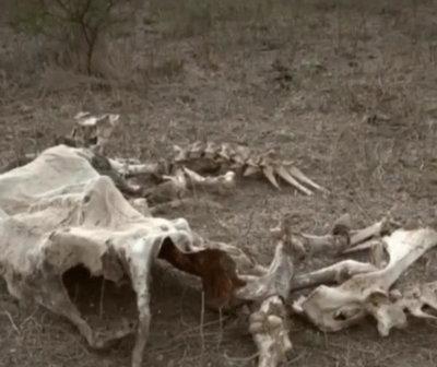 """Informe especial: """"La sequía amenaza al inmenso Chaco paraguayo"""""""