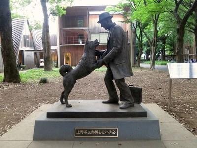 Revelan nuevas fotos de Hachiko, el perro que esperó por 9 años a su dueño