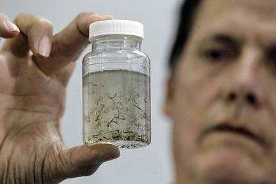 Advierten sobre GRAN EPIDEMIA de dengue y ALTO PARANA podría ser el EPICENTRO