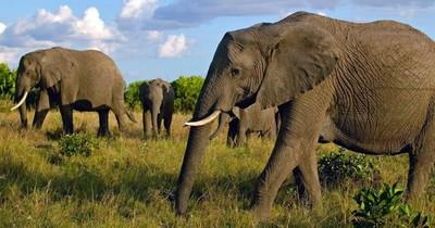 Misteriosa muerte de al menos 275 elefantes en Botsuana