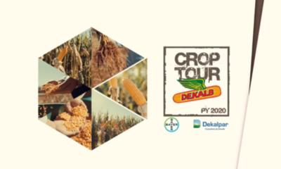 » Rendimientos de maíz Dekalb fueron presentados online