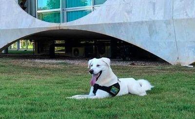 Perro adoptado por primera dama brasileña fue reclamado por su dueño