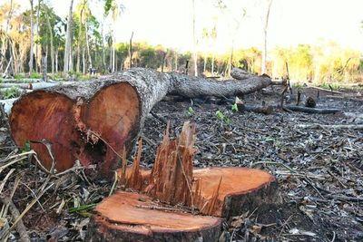 Itaipú recupera 11 hectáreas de bosque protegido que habían sido invadidas