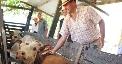 Segundo periodo de vacunación contra la fiebre aftosa y brucelosis bovina se inicia el lunes