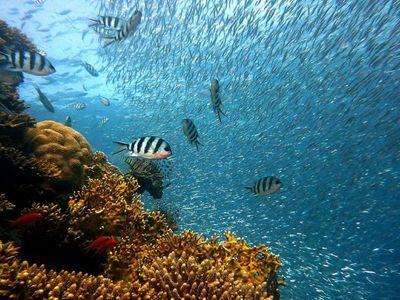Apareamiento de muchos peces está en peligro