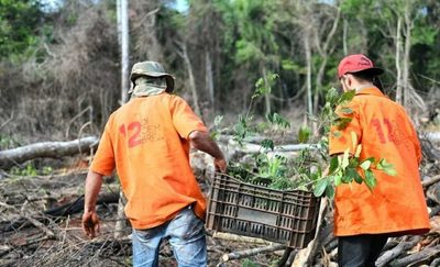 Despliegue logístico permite mantener seguridad y restaurar franja de protección de Itaipu en Puerto Indio
