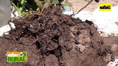 Cultivo de soja en campos bajos e inundables