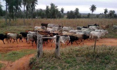 DENUNCIAN ANIMALES DESAPARECIDOS EN CNEL. BOGADO Y SAN PEDRO DEL PNÁ.