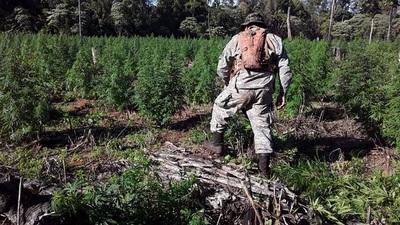 Repostan más de U$S 12 millones en pérdidas al narcotráfico