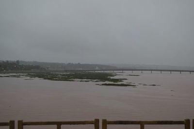 """""""Alfombra"""" de camalotes tras intensas lluvias"""